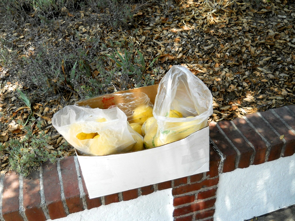 People bag grapefruits for their neighbors and leave them out by the sidewalk