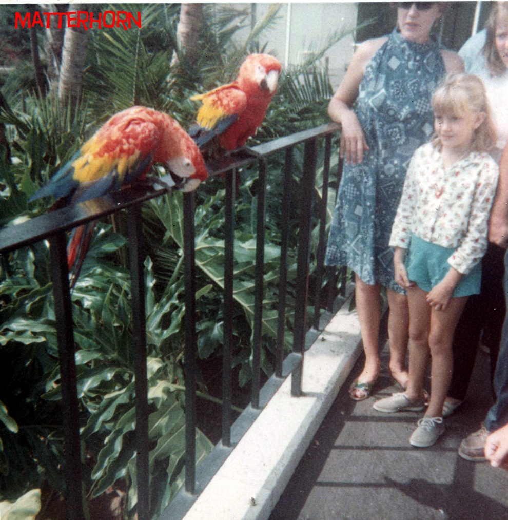 Come see the parrots