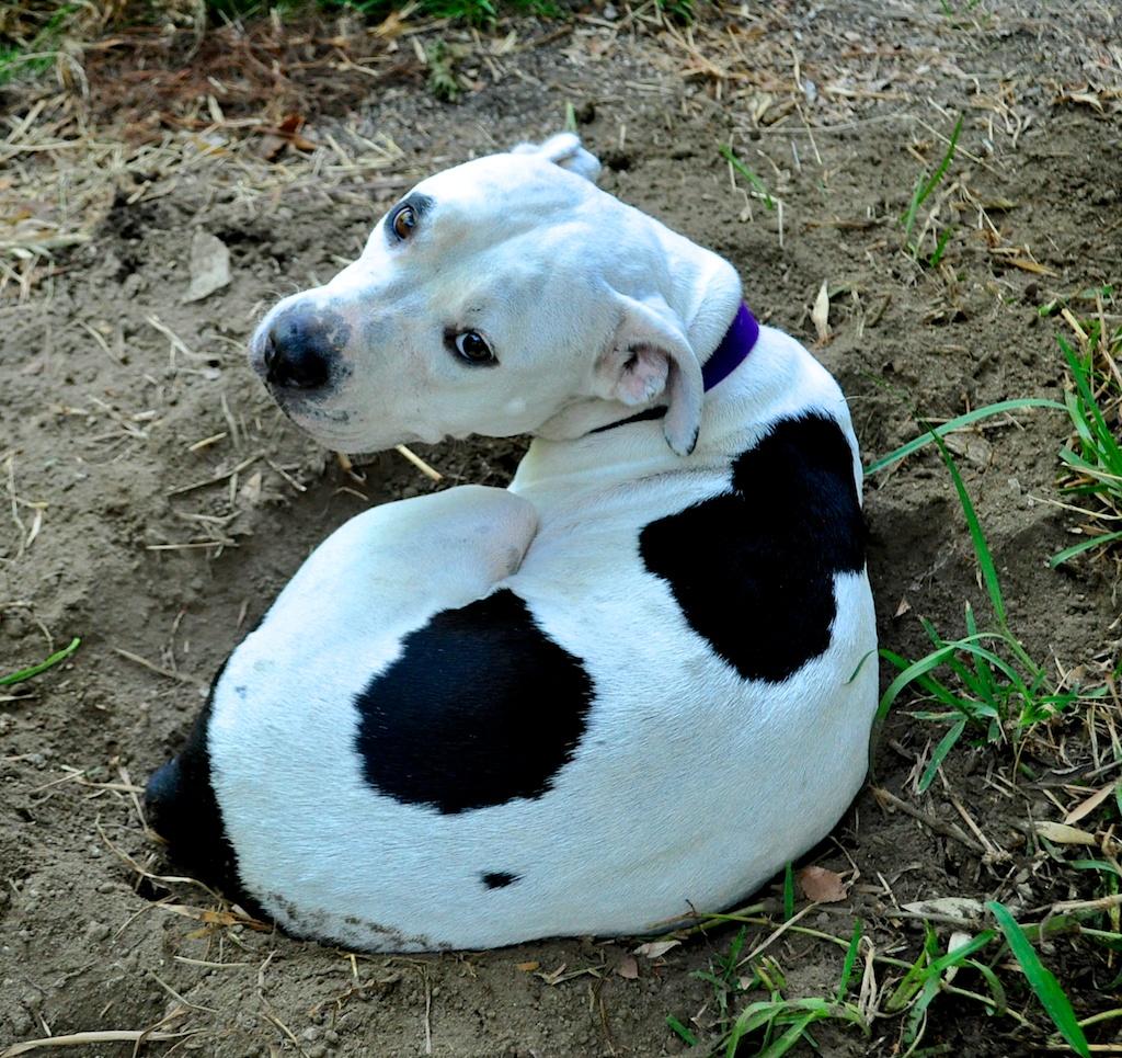 I'm going to dig a hole in the yard and sit in it